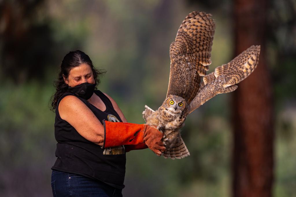 Owl Relaease