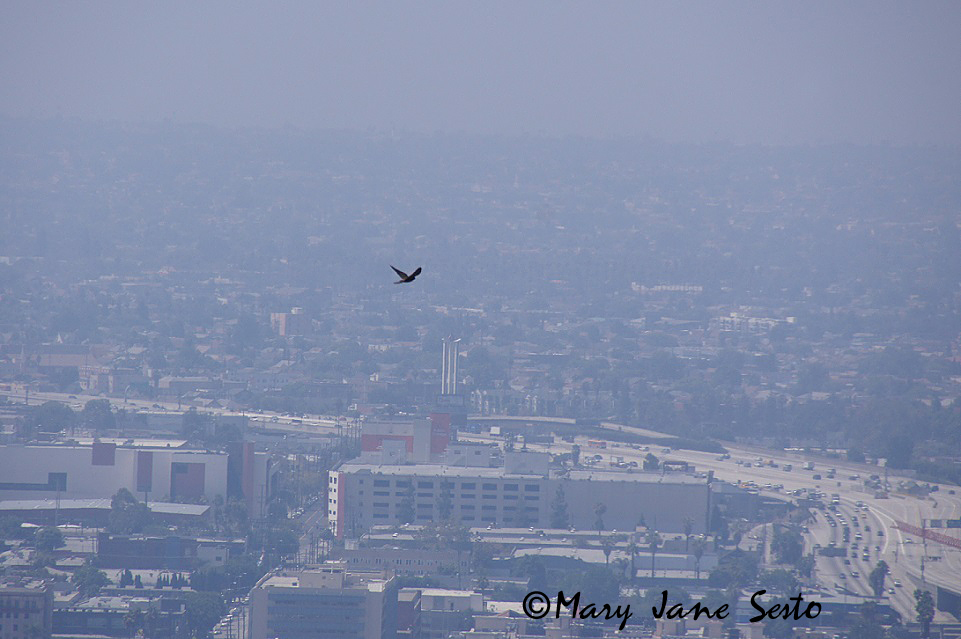 bird flying over los angeles